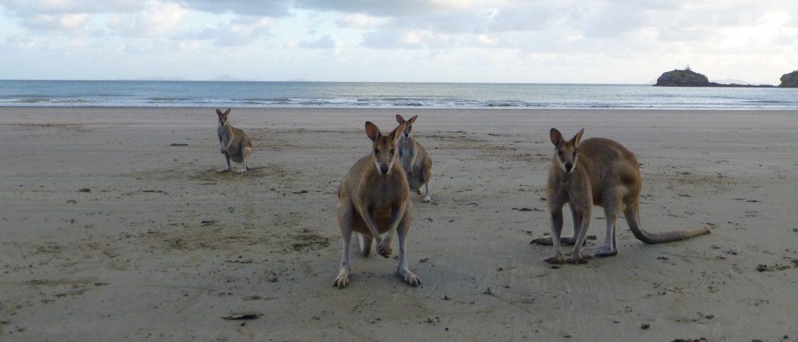 Australië oost rondreis